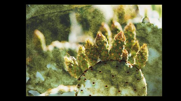 Botanical-03