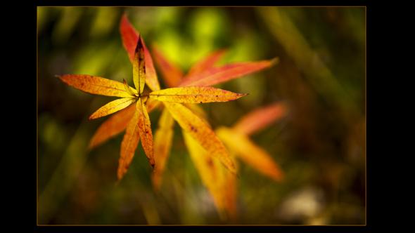 Botanical-05