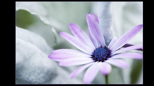 Botanical-06