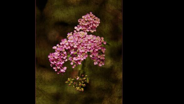 Botanical-08