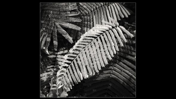 Botanical-09