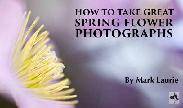 How To Take Great Spring Flower Photographs