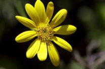 17 Tips for Spectacular Flower Photographs.